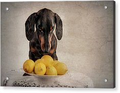 When Life Gives You Lemons... Acrylic Print by Heike Willers
