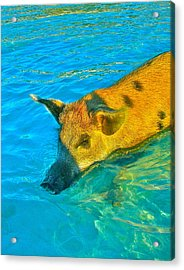 When Pigs Swim Acrylic Print