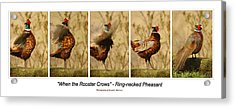 When The Rooster Crows Acrylic Print