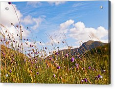 When The Sun Is Shining Everything Around Smiling Towards. Scotland Acrylic Print