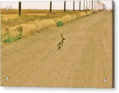 Acrylic Print featuring the photograph Where Is Everyone? by Shirley Heier