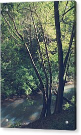 Where It's Shady Acrylic Print by Laurie Search