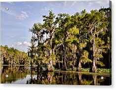 Where The Cypress Grows Acrylic Print by Lana Trussell
