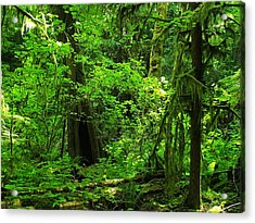 Where The Forest People Live Revised Acrylic Print