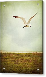 Where To Go? Acrylic Print by Trish Mistric