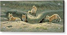 Where's Mom-fox Pups Acrylic Print by Paul Krapf