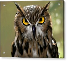 The Gaze Of An Owl - Where's My Dinner?  Acrylic Print by Ron Grafe