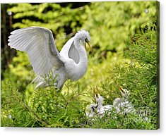 Where's Our Lunch Ma Acrylic Print by Kathy Baccari