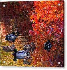 Which Way Acrylic Print by Rona Black