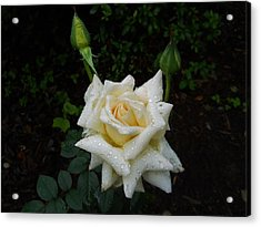 While The Dew Is Still On The Roses Acrylic Print
