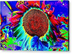 Whimsical Colorful Sunflower Acrylic Print by Annie Zeno