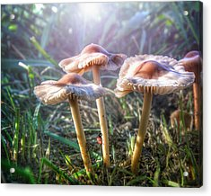 Whimsical Enchanted Garden Of Mushrooms...ladybug Pink Purple Green Acrylic Print by Wendy Thompson
