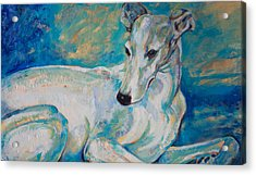 Whippet-effects Of Gravity 4 Acrylic Print by Derrick Higgins