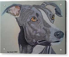 Whippet - Grey And White Acrylic Print