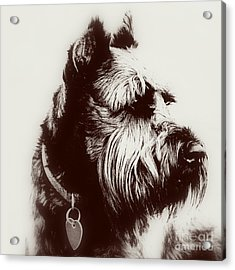 Whiskers Acrylic Print by Mickey Harkins