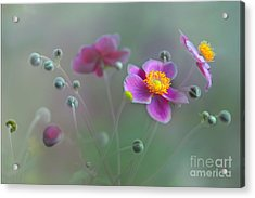 Whisper Acrylic Print by Elaine Manley
