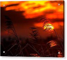 Whispering Sunset Acrylic Print by Mark Andrew Thomas