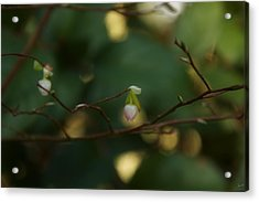 Acrylic Print featuring the photograph Whispers Of Spring In The Tranquil Forest by Lisa Knechtel