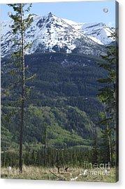 Whistler - Jasper - Canada Acrylic Print by Phil Banks