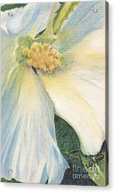 White Althea Acrylic Print by Jan Gibson
