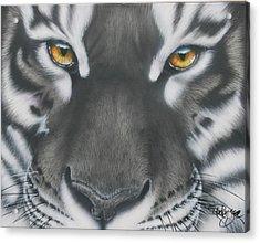White And Black Tiger Acrylic Print
