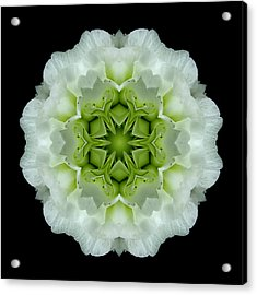 White And Green Begonia Flower Mandala Acrylic Print by David J Bookbinder