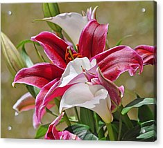 White And Red Lilies Acrylic Print