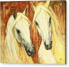 White Arabian Horses Acrylic Print by Silvana Gabudean Dobre