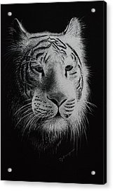 White Bengal Tiger Acrylic Print by Joy Bradley