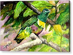 Acrylic Print featuring the painting White-bibbed Fruit Dove  by Jason Sentuf