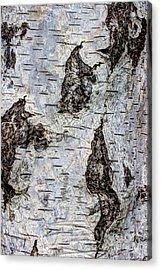 White Birch Abstract  Acrylic Print by Heidi Smith