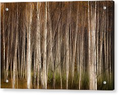 White Birch Abstract Acrylic Print