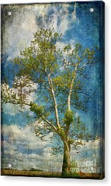 White Birch In May Acrylic Print by Lois Bryan