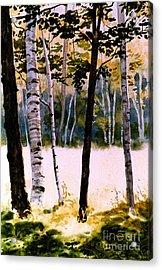 White Birch Trees Acrylic Print by Karol Wyckoff
