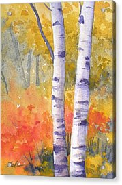 White Birches In Autumn Acrylic Print