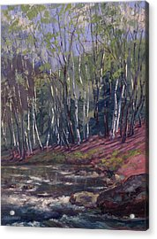 White Birches On Otter Brook Acrylic Print