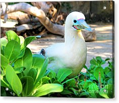 Acrylic Print featuring the photograph White Bird by Kristine Merc