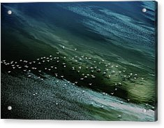 White Birds, Blue And Green Water Acrylic Print by Hao Jiang