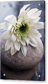 White Blossom On Rocks Acrylic Print by Linda Woods