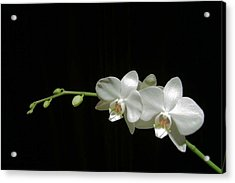 Acrylic Print featuring the photograph White Blossoms by David Rich