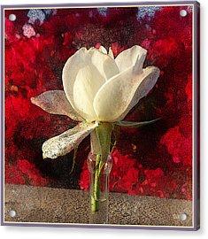 White Bud Acrylic Print by Rick Lloyd