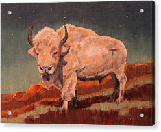 White Buffalo Nocturne Acrylic Print