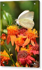 White Butterfly On Mexican Flame Acrylic Print