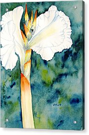 White Canna Flower Acrylic Print by Carlin Blahnik