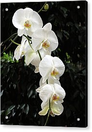 Acrylic Print featuring the photograph White Cascade by Harold Rau