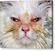 Scary White Cat Acrylic Print