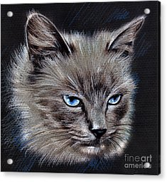 White Cat Portrait Acrylic Print