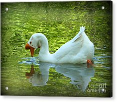 White Chinese Goose Curtsy  Acrylic Print