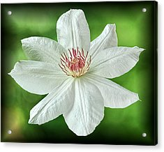 Acrylic Print featuring the photograph White Clematis by Richard Farrington