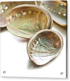 White Coloured Abalone Shells Acrylic Print by Science Photo Library